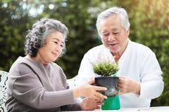 A avó ajuda o avô a importar-se com plantas foto de stock