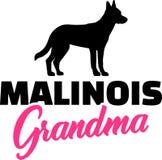 Avó de Malinois com silhueta fotografia de stock