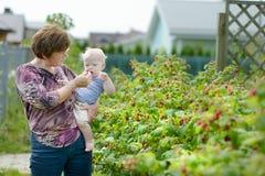 Avó e suas framboesas da colheita do bebê Fotografia de Stock Royalty Free