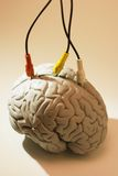 av δείγμα καλωδίων εγκεφά&lam Στοκ Εικόνα