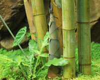 For av bambu arkivbilder