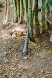 For av bambu royaltyfri fotografi