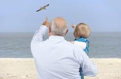 Avô com a neta que olha gaivotas Imagem de Stock