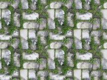 Av gräs i en vägg av vita tegelstenar Arkivbild