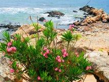 Ö av Krete Royaltyfri Fotografi