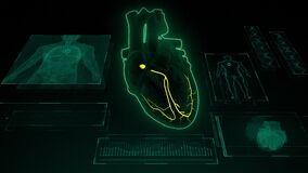 AV Node Signals in the Heart with Human Body