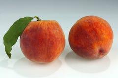 av nya persikor Royaltyfri Bild
