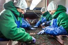 04 av Oktober 2017 - Vinnitsa, Ukraina Folk på arbete i prote Royaltyfri Fotografi