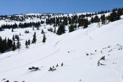 Av pistespår i snön Fotografering för Bildbyråer