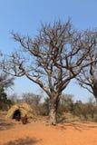 By av Sanen i Namibia royaltyfri fotografi