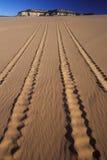 Av vägmedelspår i sand parkerar Coral Pink Sand Dunes State, Utah Royaltyfri Bild