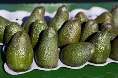 Avacados sunning. Brigt green avacados on a paper tray on a desk royalty free stock photos