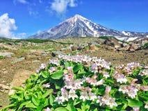 Avacha火山,堪察加,俄罗斯 免版税库存照片
