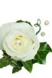 Avalancha Rose y botón de la boda de la hiedra Fotos de archivo libres de regalías