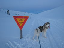 Avalanche. Warning in Arctic Lapland Royalty Free Stock Photos