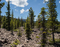 Avalanche Area on Mount Lassen Stock Image