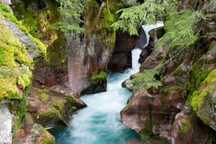Avalanche Creek. In Glacier National Park Stock Photography