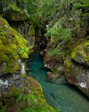Avalanche Creek Gorge, Glacier National Park Stock Photos
