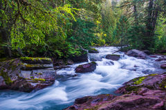 Avalanche Creek. Rushing Waters Of Avalanche Creek In Clacier National Park, Montana Royalty Free Stock Photo