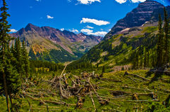 Avalanche destruction Path Next to Maroon Bells in Rocky Mountains Royalty Free Stock Photos