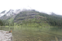 Avalanche Lake Stock Image