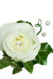 Avalanche Rose and Ivy Wedding Button Royalty Free Stock Photos