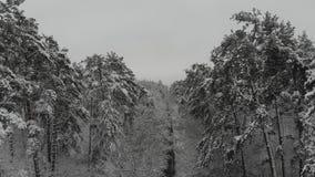 Avaliação aérea da floresta do inverno filme