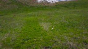 Avaliação aérea do prado verde Vista superior vídeos de arquivo