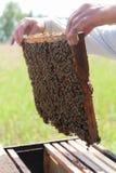 Avaliação da colmeia Fotos de Stock