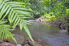 Avana strömRarotonga kock Islands Royaltyfri Foto