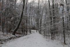 Avance del invierno Fotografía de archivo libre de regalías
