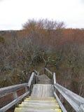 Avance en bois d'escaliers à travers le marécage sur Plum Island Mass images stock
