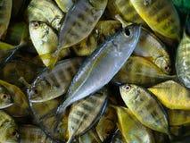 Avannotti freschi dai pescatori filippini artigianali Fotografia Stock