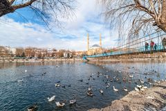AVANOS, TURKEY - JAN 23, 2019: Goose ducks and swans near by wooden hanging bridge on snowy winter time in Kizilirmak river royalty free stock image