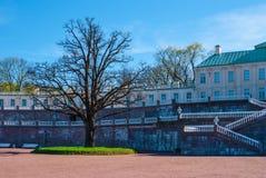 Avant-cour du palais avec le grand arbre Image stock