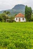 Avant d'une ferme en pierre de Chambre avec la plantation de soja images libres de droits