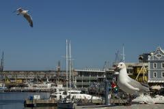 Avant de l'eau de v&A de Capetown Photos stock