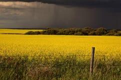 Avant de pluie approchant la collecte de canola de Saskatchewan image libre de droits