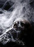 Avant de vrai crâne Image stock