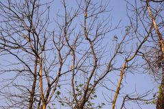 avant sans feuilles de branches d'arbre de ciel bleu photographie stock