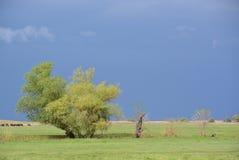 Avant tempête Photo libre de droits