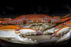Avant view2 de crabe bleu Photographie stock