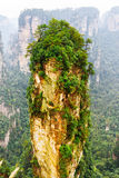 The Avatar Hallelujah Mountain among green woods and rocks. Scenic natural quartz sandstone pillar the Avatar Hallelujah Mountain among green woods and rocks in royalty free stock photo