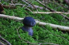 Avatar mushroom Stock Images