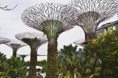 Garden by Bay. Avatar plants, green stock photos