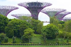 Gardens by the Bay, Singapore. Avatar trees- day view, Gardens by the Bay , Singapore royalty free stock images