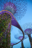 Avatar Trees during twilight. An image of the supertree groves found in Gardens by the Bay in Singapore. Called by locals as avatar trees since it looks similar stock photography