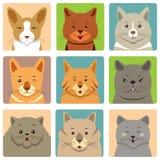 Avatars e expressão diferentes dos gatos Foto de Stock Royalty Free