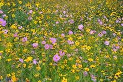 Sätta in av blommor Royaltyfria Foton