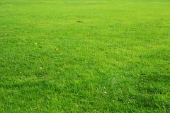 Naturlig grön gräsbakgrund texturerar Arkivbilder